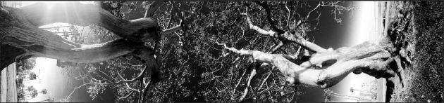 TreesSide